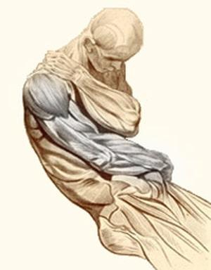 שרירי מפרק הכתף