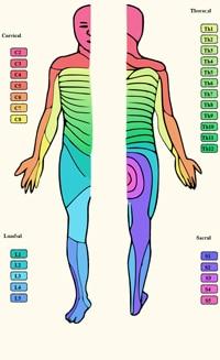 נוירופתיה של העצב השוקיתי