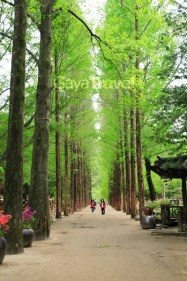 Cool Enviroment at Nami Island