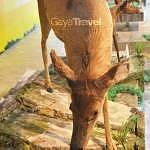 Muzium Alam Semulajadi (Museum of Nature) picture 1