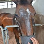 Putrajaya Equestrian Park picture 2