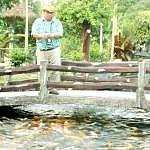 The tour guide of Desaru's fruit farm feeding fishes