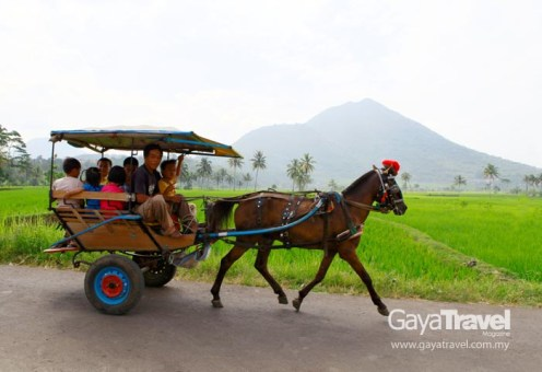 Charming horse-drawn carriages