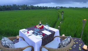 Dining on the rice field