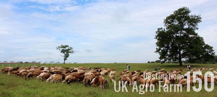 Destination: UK Agro Farm