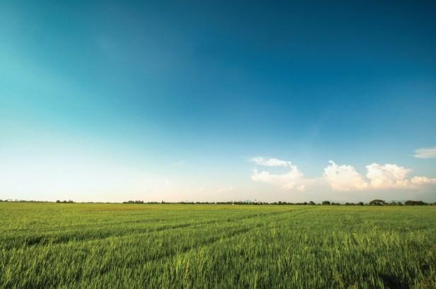 Kedah paddy field
