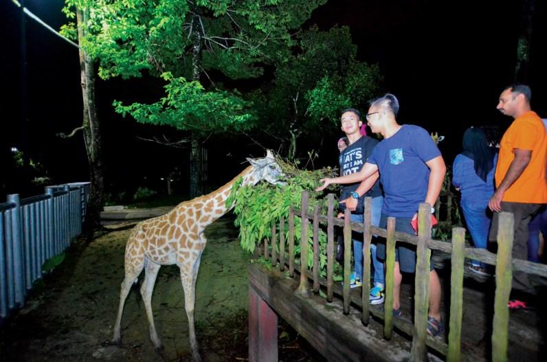 Zoo Taiping Night Safari