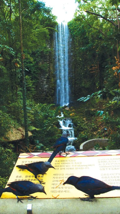 The Waterfall Aviary is one of the largest walk-in aviaries that consists of more than 600 birds that fly and roam freely