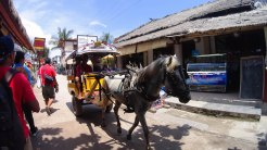 'Cidomo' (horse carriage) is the only type of transport on Gili Trawangan.