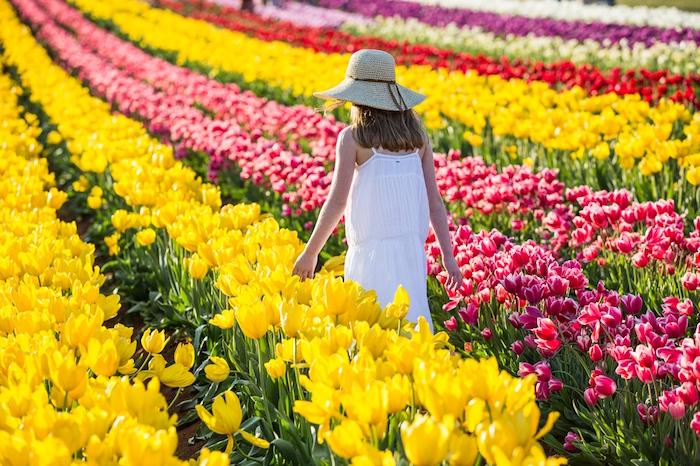 Springs Bursts Into Full Colour At Tesselaar Tulip Festival