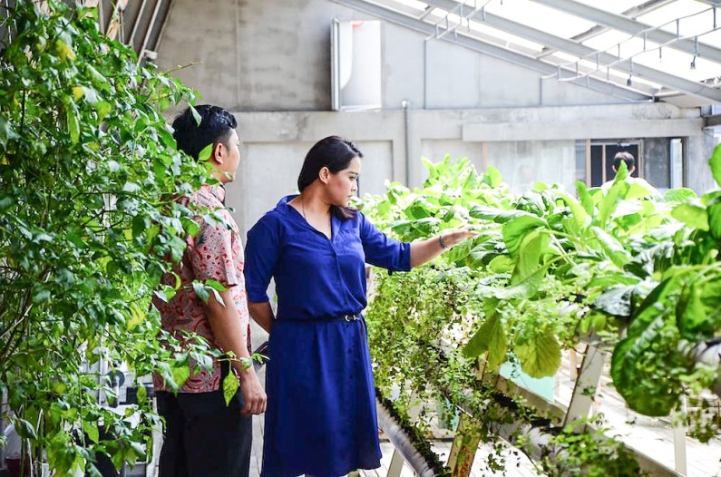Greenhost Hotel General Manager Nia K Sadjarwo (right) checking the crops cultivated at the hotel's rooftop hydroponic garden while Crative Farming Manager Dasa looks on