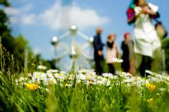 Blooming flowers with Atomium building as background