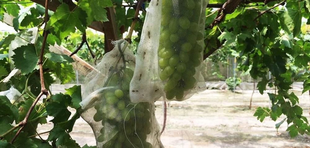 Perak's Agro Wonders
