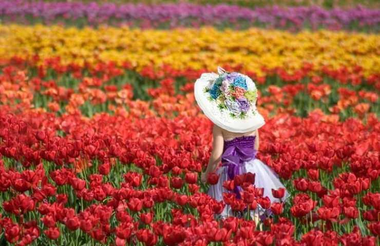 Tesselaar Tulip Festival