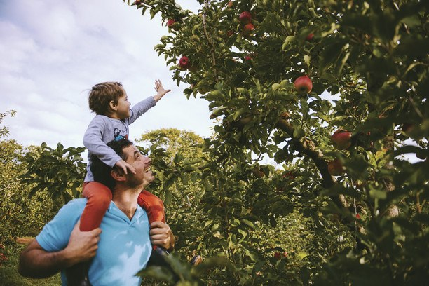 Father and son at the Fontanini Fruit and Nut Farm.
