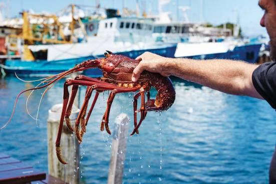 Western Australian Fresh Crayfish