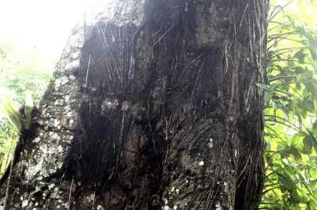 Sarappung Baby Grave