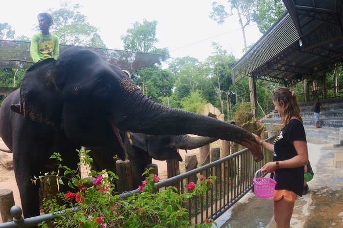 Kenyir Elephant Conservation Village
