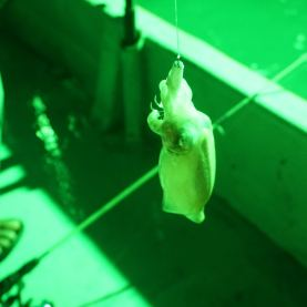 Squid-jigging at Kuala Sungai Baru