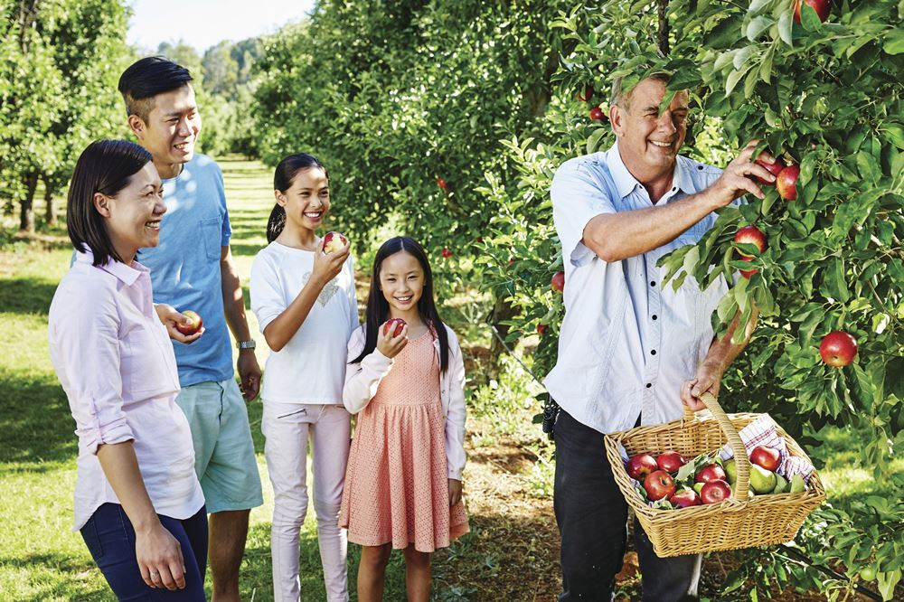 Apple picking in the Perth Hills. (Picture Credit: Tourism Western Australia)