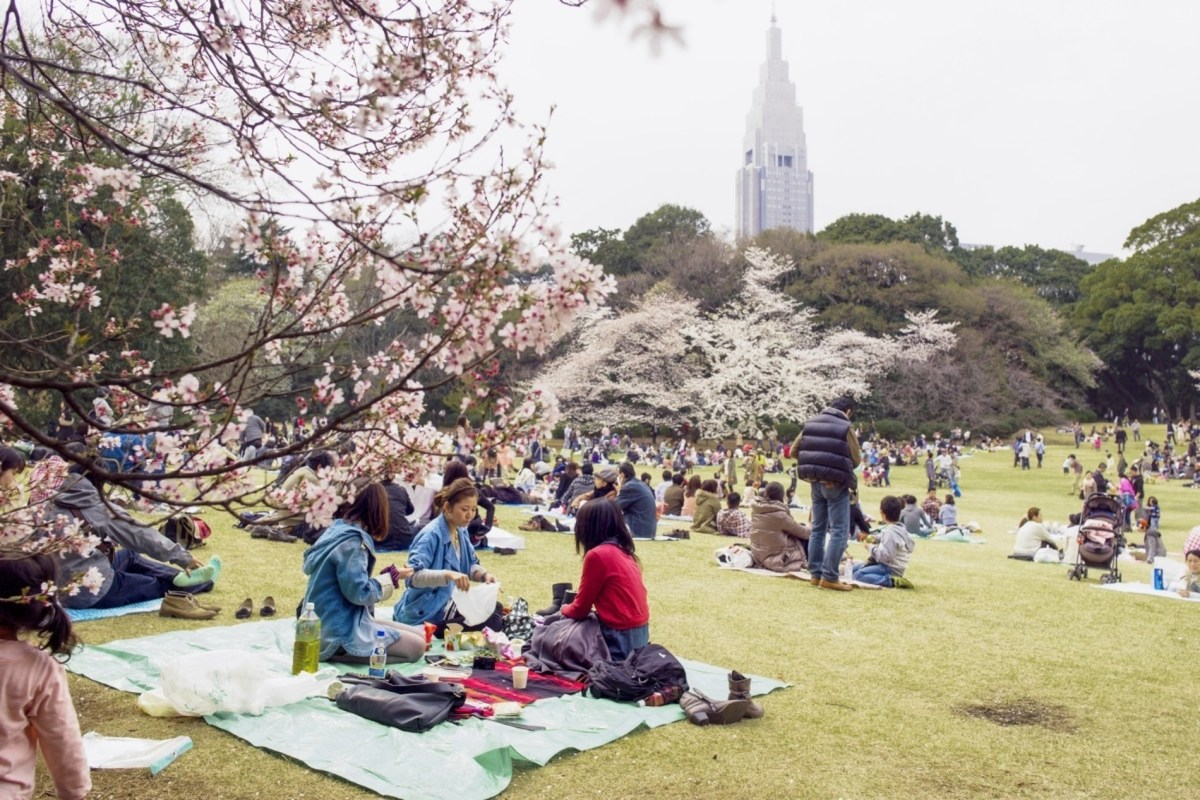 Immerse Yourself in Japan's Cherry Blossom Season with Airbnb's Unique Sakura-Themed Experiences