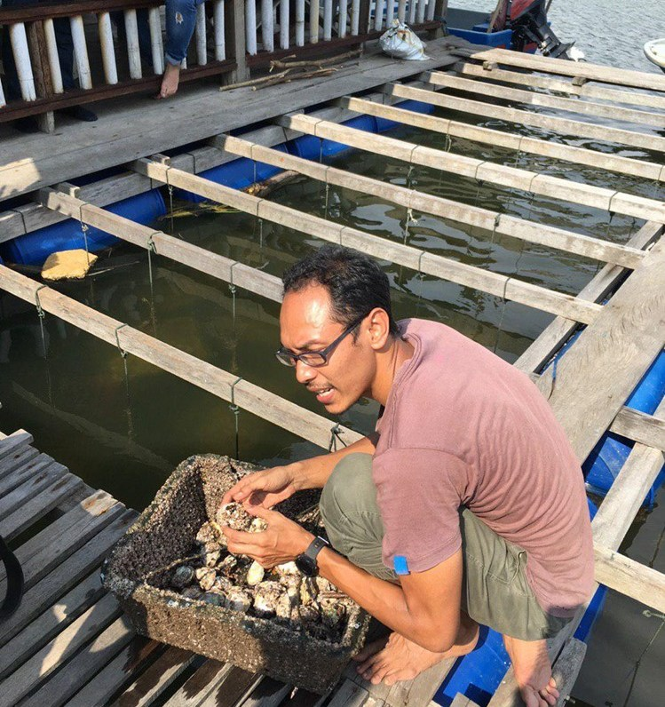 Scooping fresh oysters at Bakau Hijau