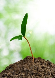 bigstock-Growing-green-plant-22764032