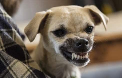 dog bite injury attorneys las vegas