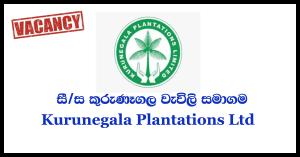 Secretary to Chairman - Kurunegala Plantations Ltd