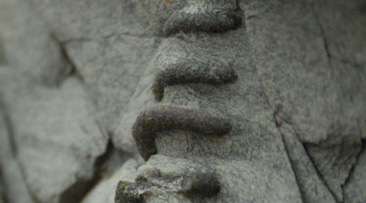Spiralling burrow