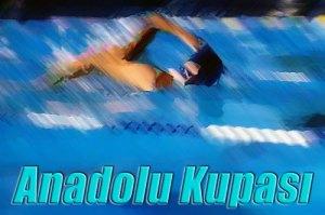 Anadolu Kupası Resim