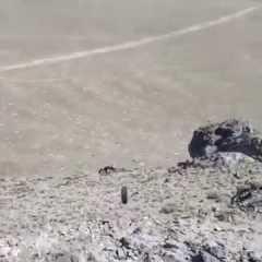 Talebano lanciato dalla collina da soldati americani