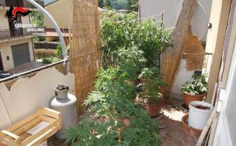 coltivazione Montella