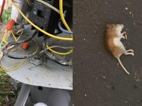I resigned after finding 4 Dead Rodents in front of my home - board member