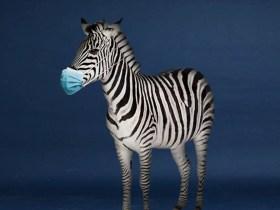Omu Resort welcomes first Zebra in Lagos