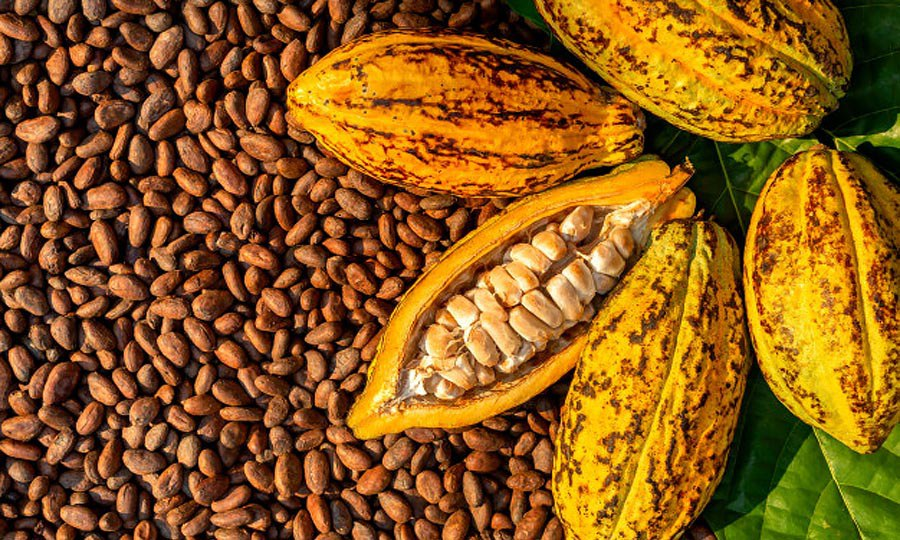 Tons of cocoa stranded at ports due to CBN docs. – Cocoa exporters