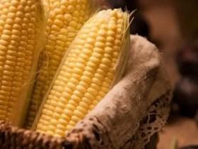 CBN Bans Forex For Maize Importation