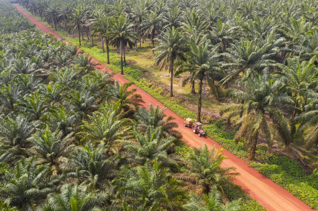 Nigeria spends over N370b on palm oil importation