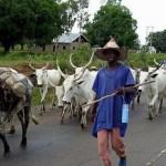 Herdsmen Soldiers return to prove point in Ogun