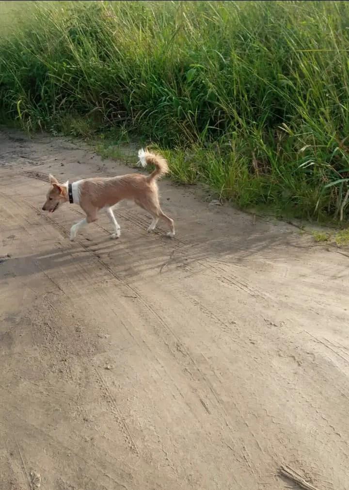 Natural ways to get rid of Ticks on Dogs - Temi Badmus