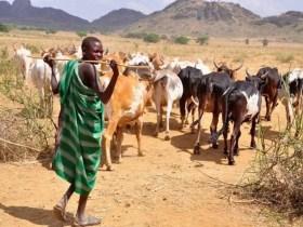 Killing me won't abolish ranching law in Benue – Ortom