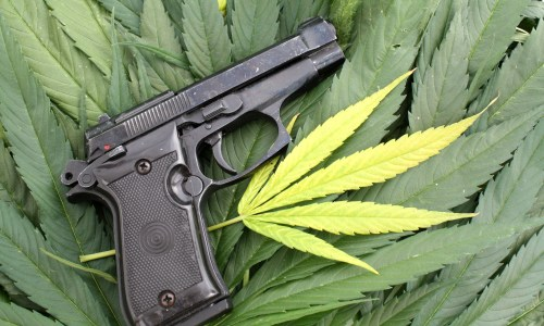 do marijuana users lose their right to own a firearm
