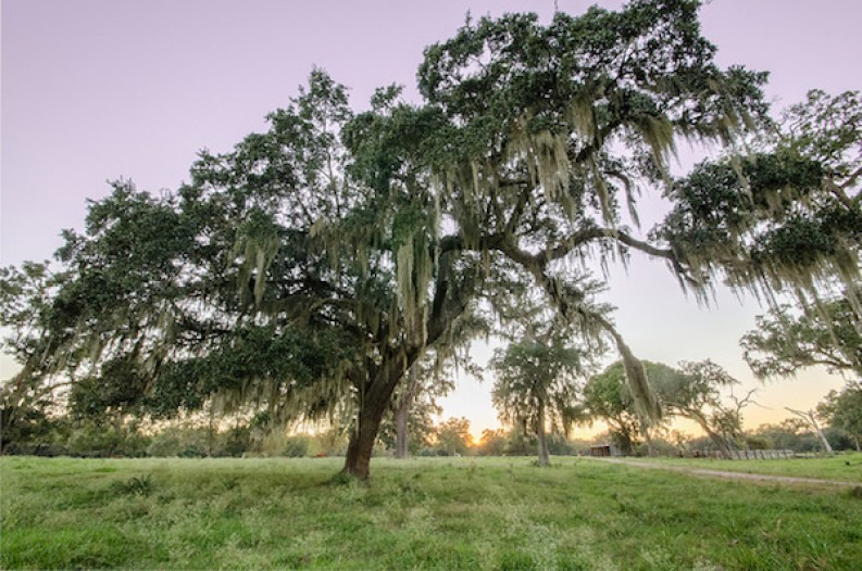 Nature Conservancy's Brazos Woods Preserve