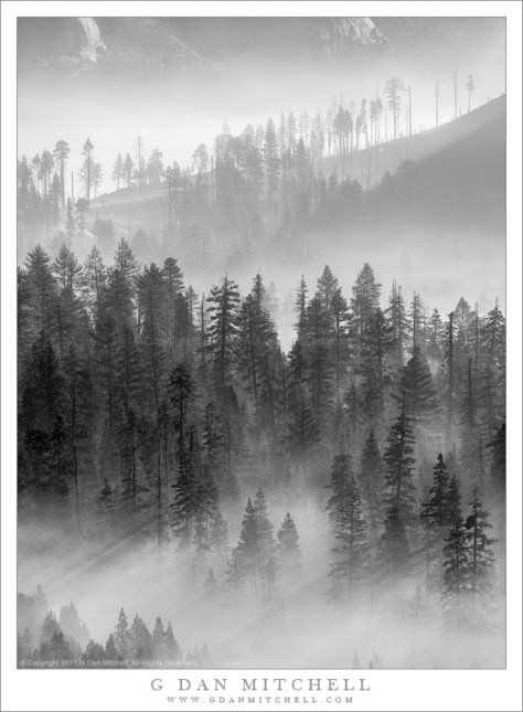 Morning Light On Wildfire Smoke
