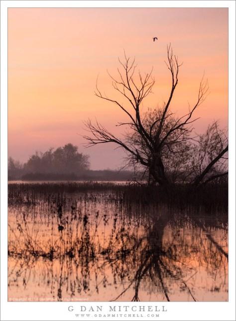 Crane, Tree, Morning Sky