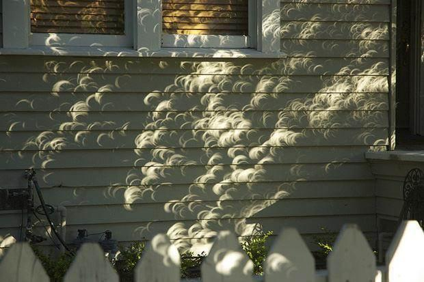 Zwielokrotneiony obraz częściowo zaćmionego Słońca jako efekt camera obscura dzięki przerwom pomiędzy liśćmi