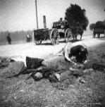 Wrzesień 1939 roku. Gdzieś w Polsce. Polskie dzieci i ich matka zabite przez lotnika Luftwaffe.