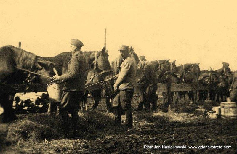 Obsługiwany przez polskich jeńców punkt zborny koni
