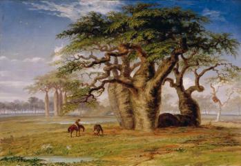 Drzewa butelkowe Australia
