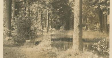 Oliwa – w poszukiwaniu tajemnic przeszłości – cz. 76 ostatnia